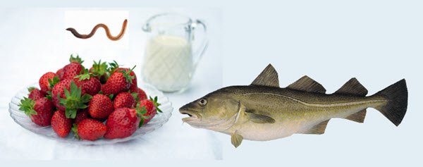 strawberriescreamwormsfish