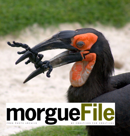 free photos morgue file