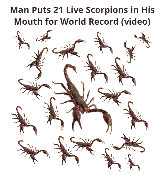 Man Puts 21 Live Scorpions in His Mouth for World Record (video)